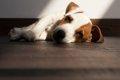 犬の大腸炎について…の画像