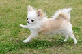 パテラは小型犬がか…の画像