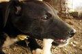 犬は骨を食べてもい…の画像
