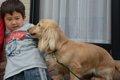 犬が唸る本当の理由…の画像
