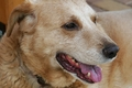 犬の老衰 その症状…の画像