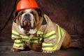 ペットによる火災が…の画像