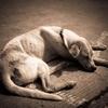 犬の保険は入るべき…の画像