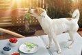 犬の感じる「美味し…の画像
