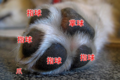 犬の肉きゅう好き必…の画像