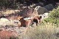 山で暮らす3姉妹犬。…の画像