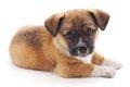 初めて犬を飼うこと…の画像