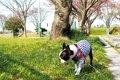 散歩中に犬が臭いを…の画像