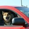 愛犬とのドライブは…の画像