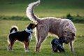犬が飼い主のお尻を…の画像
