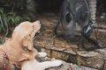 犬用クールマットの…の画像