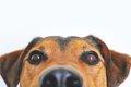犬が失明してしまう…の画像