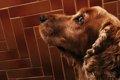 犬のワクチン、各種…の画像