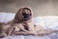 犬を病気になりやす…の画像