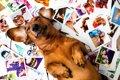 Instagramで愛犬を人…の画像