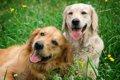 「楽観的な犬」と「…の画像