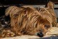 犬の子宮蓄膿症が食…の画像