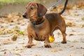 保護犬をもっとオー…の画像
