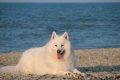 犬小屋は大型犬など…の画像