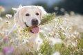犬に安全な植物4選の画像