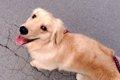 愛犬のお散歩後のケ…の画像
