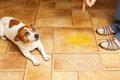 犬がトイレ以外でオ…の画像