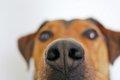 犬の体臭が臭い!ニ…の画像