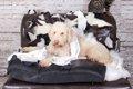 犬がソファーや家具…の画像
