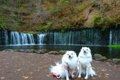 愛犬を連れて軽井沢…の画像