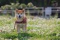 犬が秋に花粉症にな…の画像