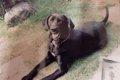 老犬介護の実情につ…の画像