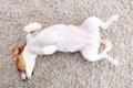 愛犬とのスキンシッ…の画像