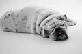 犬の肥満細胞腫につ…の画像