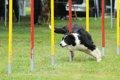 犬と遊ぶ時間はどの…の画像