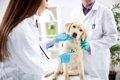 犬が苦しそうに呼吸…の画像