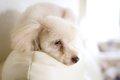 老犬の痙攣に慌てな…の画像
