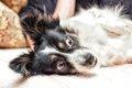 犬が怖がる3つの音の画像