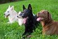 犬の主従関係や上下…の画像