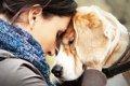 虹の橋を渡った愛犬…の画像