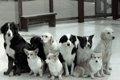 捨てられた犬の「現…の画像