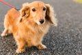 犬の肉球が火傷する…の画像