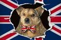 犬を飼うのに「犬税…の画像