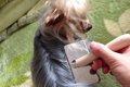 おすすめ犬のブラッ…の画像