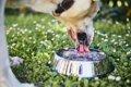 犬が水を飲まない時…の画像