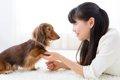一人暮らしで犬を飼…の画像