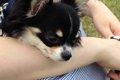 ラディカは犬用キャ…の画像