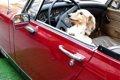 犬と車で旅行すると…の画像