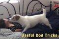 世界一賢い犬として…の画像