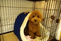 愛犬のためのペット…の画像
