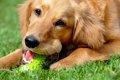犬の噛むおもちゃ人…の画像